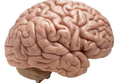 مغز ۲