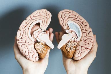 Hands holding two hemispheres of human brain